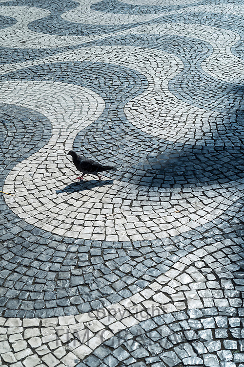 Solitary feral pigeon having a stroll across paviers of wavy lines and geometric patterns in Rossio Square in Lisbon, Portugal