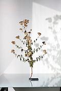 wildflower plant twig