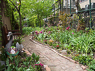 Alice's Garden, dedicated to the memory of Alice Parsekian who cared for the garden until her death in 2010. Alice was born to Armenian parent, emigrated to Turkey, then the Bronx and leter the Webster Women's Residence on West 34th Street. Se became a community legend as a gardener and caretaker of public space in the Neighborhood.  The garden is located on West 34th Street between Ninth and Tenth Avenues and is a secret, beautiful oasis.