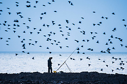 © Licensed to London News Pictures. 31/12/2016. Aberystwyth, Wales, UK. A lone fisherman is surrounded to flocks of starlings as they fly in to roost  in Aberystwyth on the last day of the year - - the weather in the west has been clear, in sharp contrast to the thick fog covering much of south east England .  Photo credit: Keith Morris/LNP