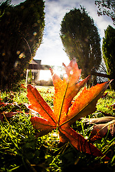 Winter sunlight through leaves in my garden..©Michael Schofield.