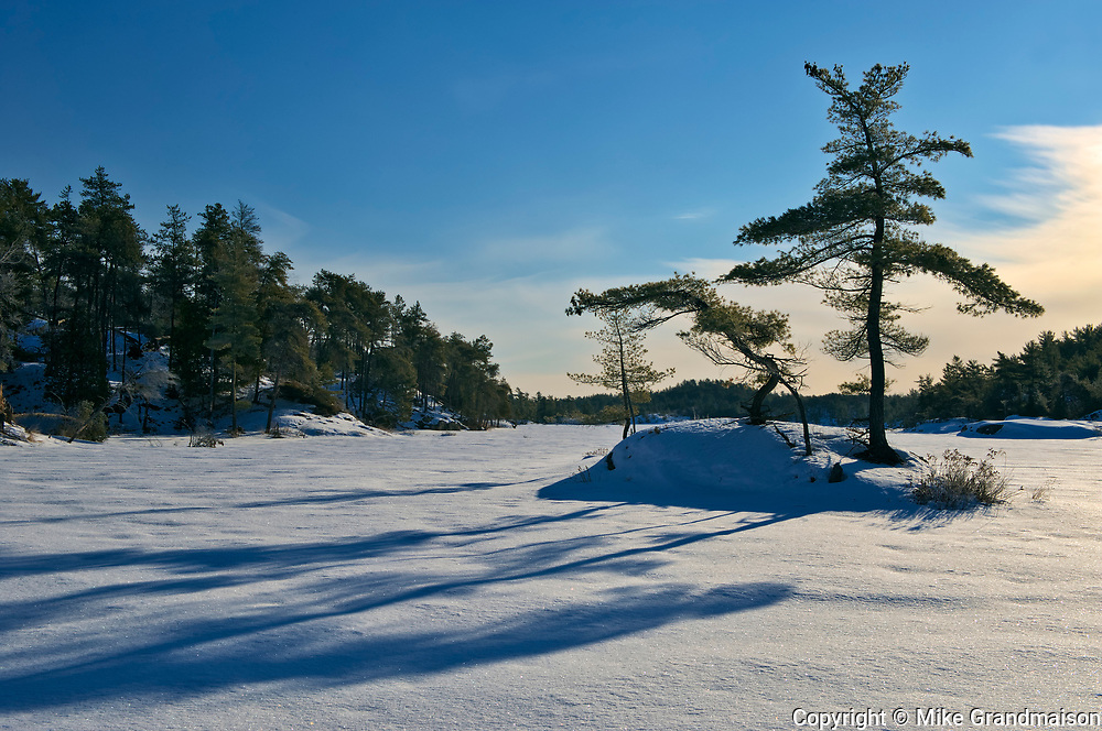 Pine trees on island of frozen McGregor Bay (Georgian Bay) <br />Whitefish Falls<br />Ontario<br />Canada