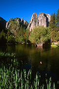 The Cathedral Rocks in Yosemite Valley, California, are partially reflected in the Merced River at sunrise.