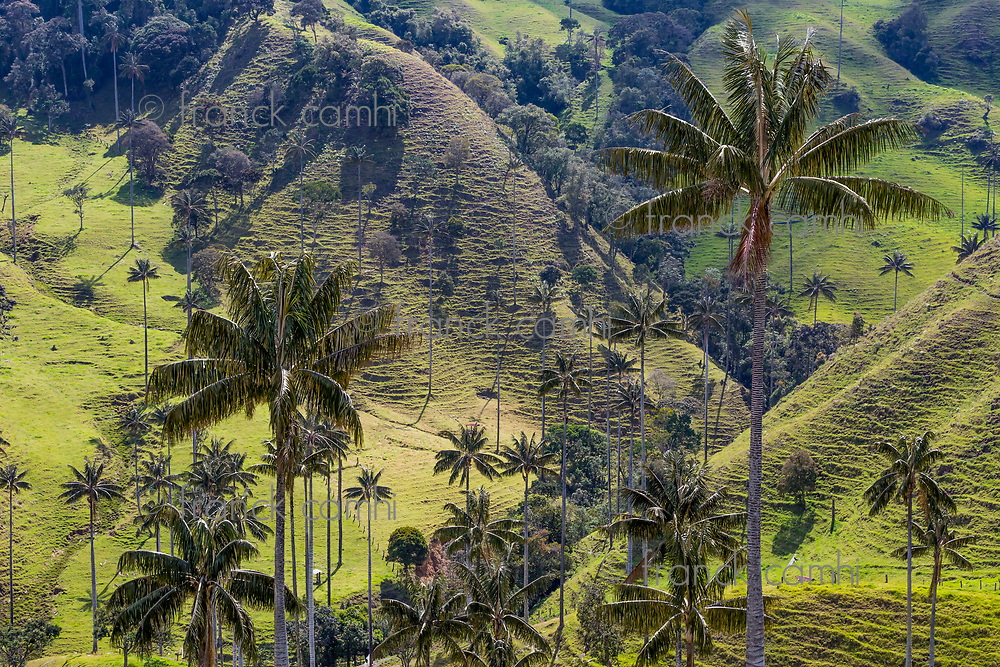 Landscapes Caldas in Colombia South America