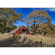 Abandoned Barn And Oaks - Willits, CA - Highway 20
