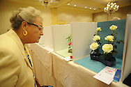 MOUNT LAUREL, NJ - JULY 26:  dLinda Burg, of Hanford, California views a miniature rose display uring the 2014 National Miniature Rose Show, hosted by the West Jersey Rose Society at the Hotel ML  July 26, 2014 in Mount Laurel, New Jersey. (Photo by William Thomas Cain/Cain Images)