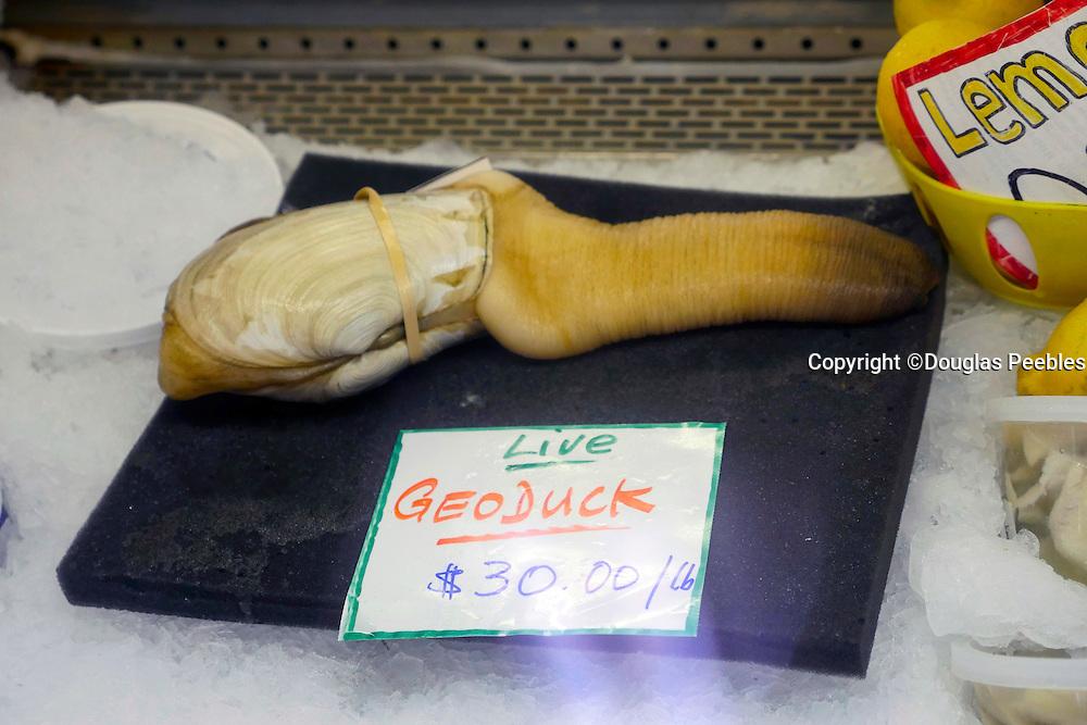 Geoduck, Taylor Shellfish Samish Farm Store, San Juan Islands, Puget Sound, Washington State