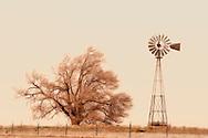 Windmill, cottonwood tree, Texas Panhandle, east of Tulia, Texas