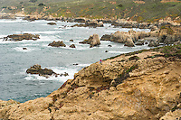 California coastal photography tour with Cathy.  ©2014 Karen Bobotas Photographer