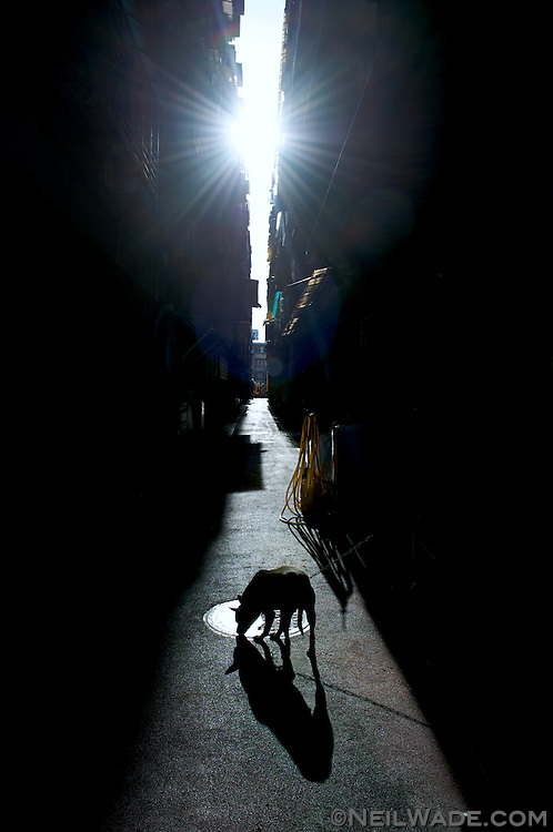 A pet dog is tied up in a narrow urban alley in Taipei, Taiwan.