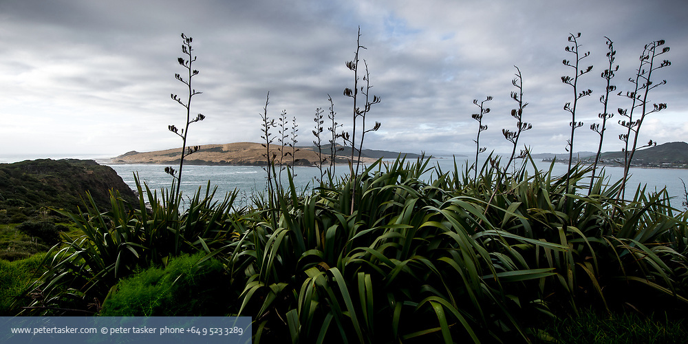 South Head Omapere, Hokianga harbour, Northland, New Zealand