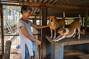 EVA RUPPEL visits with three rescued dogs on her property located near Kandy, Sri Lanka, on Wednesday, February 21, 2018. Ruppel does not cage the approximate 170 rescued dogs living with her, allowing them freedom to roam and interact in small packs in multiple pens throughout her property, as well as inside her home. Ruppel created Tikiri Trust, with the financial assistance of her father, to rescue and rehome Sri Lanka's street dogs.<br /> <br /> <br /> It is impossible to visit Sri Lanka without seeing street dogs in nearly every public space, near hotels, guest houses and restaurants, schools, offices, markets, hospitals, police stations, bus terminals, railway stations, temples, etc. These dogs do not have their own homes, but they are usually highly tolerated and are typically fed collectively by people in a particular area.<br /> <br /> According to the NGO, Kandy Association for Community Protection through Animal Welfare (KACPAW), 100 unsterilized dogs will give rise to 3,000 dogs in one year. The Sri Lankan government, as well as several NGOs, work to spay/neuter animals, but there is need to educate the public and maintain funds to stay on top of their efforts.<br /> <br /> Eva Ruppel left Germany for a three-month visit to Sri Lanka, which included time in a Buddhist meditation retreat, and she remains in this island nation 37 years later.<br /> <br /> While married, Ruppel&rsquo;s husband asked that the couple keep only three dogs in their home at any one time, and she respected his wishes. This 60-something year old lost her husband to a ruptured brain blood vessel in 1995 when he was 51 years old, after nine years of marriage. After his death, she began rescuing more and more animals and she now lives with 170 dogs, plus a dozen or so cats.<br /> <br /> With the support of her father, she started Tikiri Trust. Her father passed away in 2011, and he left her an inheritance, which she continues to use to support her cause. <br /> <br /> Ruppel, who is fluent in German, English and Sinhala, said that she has found homes for &ldquo;hundre