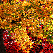 """Abundance""<br />