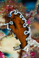 Flatworms advertise the fact they are toxic by displaying bright warning colors and patterns on their bodies.