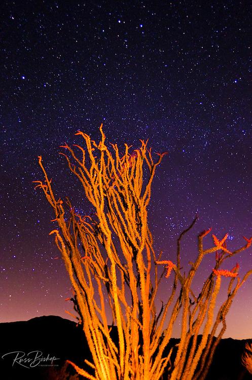 Ocotillo under the Milky Way, Anza-Borrego Desert State Park, California USA