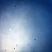 Birds flying in the evening sky, Colonia del Sacramento, Uruguay.