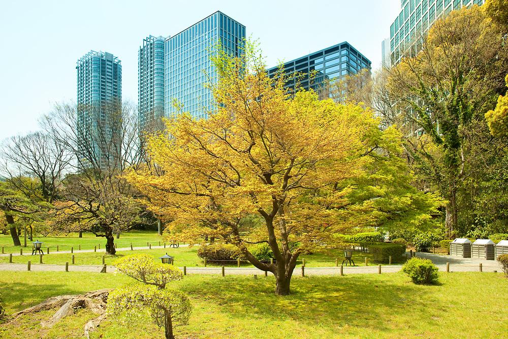 Hamarikyu (also Hama Rikyu) Gardens and modern skyscrapers of Shiodome Area, Chuo Ward, Tokyo, Kanto Region, Honshu, Japan