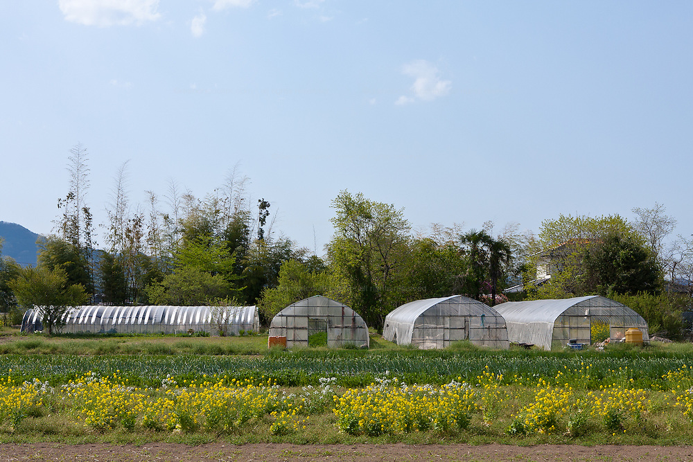 Greenhouses on a farm near the 20 kilometres exclusion zone around the Fukushima Daichi nuclear power station that was damaged in the March 11th earthquake and tsunami. Minami Soma, Fukushima Wednesday May 4th 2011