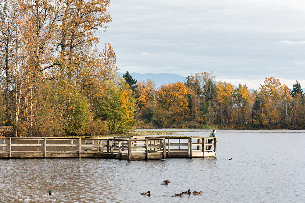 A visitor takes in the view from the dock at Mill Lake Park in Abbotsford, British Columbia, Canada. The dock is next to the lake's main boat launch and is used for wildlife viewing and fishing.