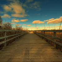 A wooden jetty passing between reed beds under a blue sky