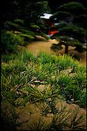 Japanese garden of Sengan-en (iso-teien) , Kagoshima, Kyushu, Japan / Jardin japonais de Sengan-en (iso-teien) , Kagoshima, Kyushu, Japon