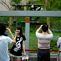 Taiwanese people watch the two giant Pandas gave as a present for the Chinese government as a step <br /> <br /> , on Monday May 18,2009/ Photographer: Bernardo De Niz/