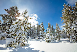 """Snowy Scene In Tahoe Donner 1"" - photograph of snow covered trees and a blue sky near Alder Creek in the Tahoe Donner are of Truckee, California."