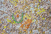 Pura Vida bracelet; Joshua Tree National Park, California.
