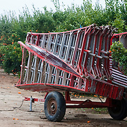 Ladders are piled high for the workers to use in the orange orchard. Please contact Todd Bigelow directly with your licensing requests.