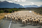 Traffic Jam, New Zealand Style