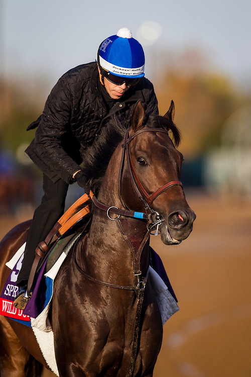 October 29, 2015:   Wild Dude, trained by Jerry Hollendorfer and owned by Jerry Hollendorfer & Green B. Smith Jr., exercises in preparation for the Breeders' Cup Sprint at Keeneland Race Track in Lexington, Kentucky. Alex Evers/ESW/CSM