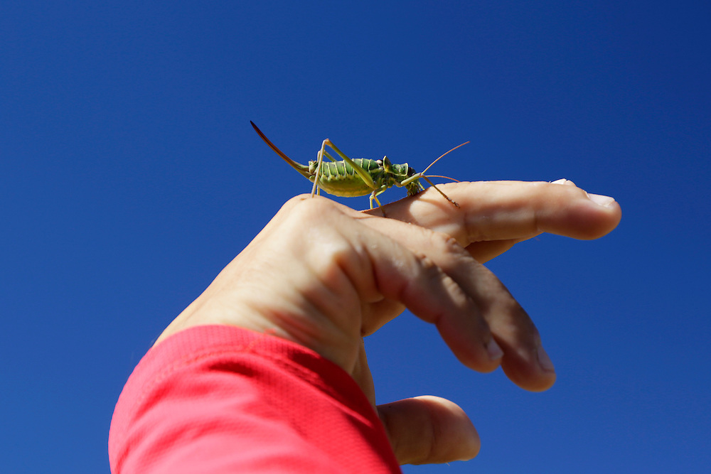 Kenan playing with a grasshopper on the mountain of  Mosor, Croatia.