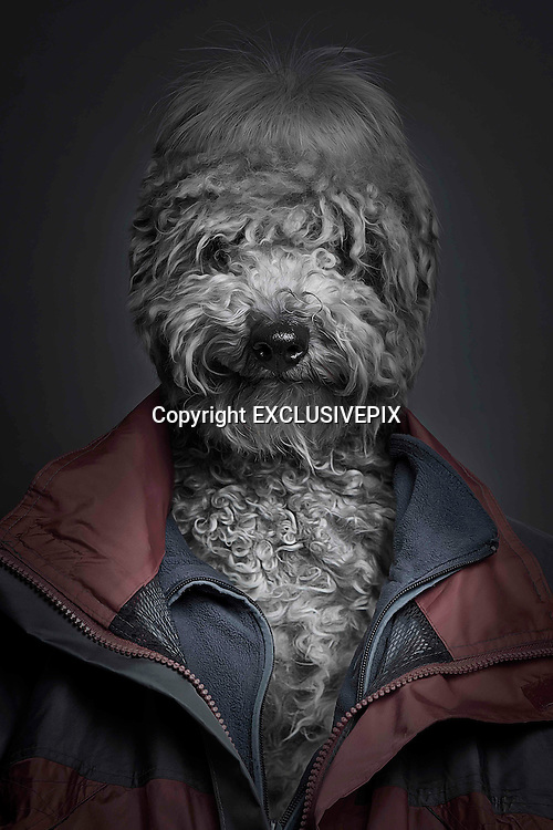 Swiss photographer has 'spontaneous idea' to create astonishing pet portraits by blending photos of dogs with their owners<br /> <br /> Swiss man Sebastian Magnani, 27, took pictures of dogs and their owners<br /> <br /> <br /> They might look like something straight out of a horror film, but these extraordinary images have been created to show the special bond between dogs and their owners.<br /> Photographer Sebastian Magnani, 27, from Brig, Switzerland, took pictures of dogs and their owners using the same position and camera settings before working his magic with editing software.<br /> The result is this startling set of images, which show the pooches with human clothes - one wearing a hoodie, another with a red coat, one with a shirt and cardigan, and another with a blue jacket.<br /> <br /> Mr Magnani wrote on his blog: 'I had a spontaneous idea in 2009 to blend my dog with my friend in one person. Thus I was able to put on my bedside table a picture of my two favourites in one picture.'<br /> Mr Magnani, who now lives in Berne, discovered a love for photography in 2006 and spent five years as a graphic designer in Brig, before deciding to 'make his passion his profession', his website said.<br /> ©SEBASTIAN MAGNANI/EXCLUSIVEPIX