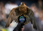 LAFC mascot Olly, a female Red Naped Shaheenat falcon on the field during the MLS game soccer match against Seattle Sounders in Los Angeles, Sunday, April 21, 2019. LAFC defeated the Sounders 4-1. (Ed Ruvalcaba/Image of Sport)