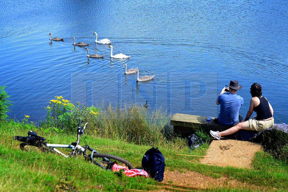 © Licensed to London News Pictures. 22/07/2012. Richmond, UK A couple watch a family of swans in the blue waters of a lake. People enjoy the warm weather in Richmond Park  today, Sunday 22nd July 2012. Temperatures in London are expected to top 30 degrees celsius this coming week. Photo credit : Stephen Simpson/LNP