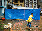 01 AUGUST 2015 - KATHMANDU, NEPAL: A boy in Kathmandu walks his dog in front of temporary housing for people displaced by the earthquake. The Nepal Earthquake on April 25, 2015, (also known as the Gorkha earthquake) killed more than 9,000 people and injured more than 23,000. It had a magnitude of 7.8. The epicenter was east of the district of Lamjung, and its hypocenter was at a depth of approximately 15 km (9.3 mi). It was the worst natural disaster to strike Nepal since the 1934 Nepal–Bihar earthquake. The earthquake triggered an avalanche on Mount Everest, killing at least 19. The earthquake also set off an avalanche in the Langtang valley, where 250 people were reported missing. Hundreds of thousands of people were made homeless with entire villages flattened across many districts of the country. Centuries-old buildings were destroyed at UNESCO World Heritage sites in the Kathmandu Valley, including some at the Kathmandu Durbar Square, the Patan Durbar Squar, the Bhaktapur Durbar Square, the Changu Narayan Temple and the Swayambhunath Stupa. Geophysicists and other experts had warned for decades that Nepal was vulnerable to a deadly earthquake, particularly because of its geology, urbanization, and architecture.          PHOTO BY JACK KURTZ