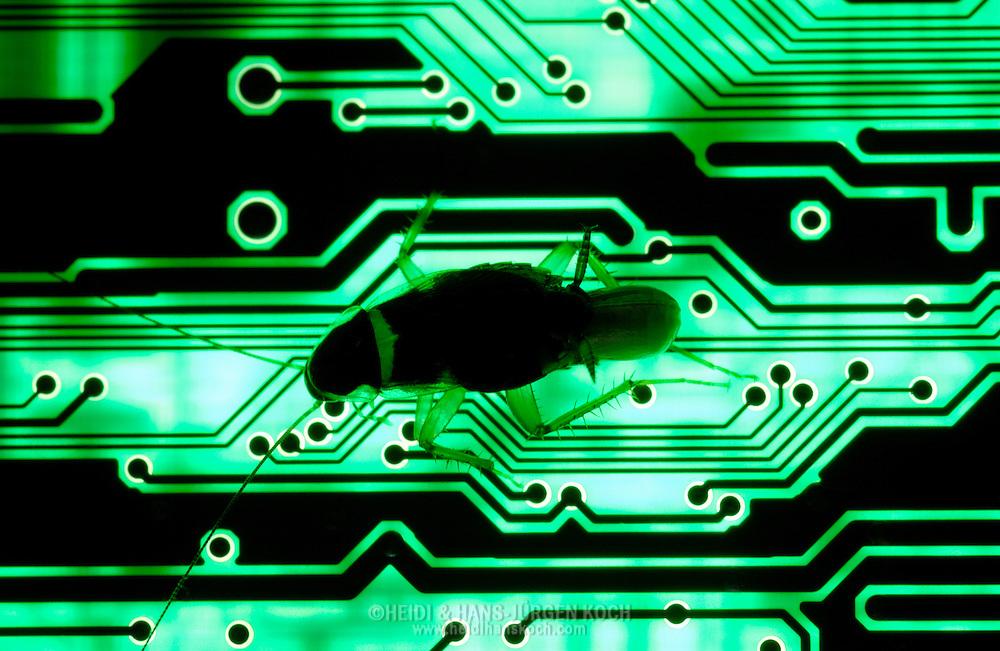 """Deu, Deutschland: Braunbandschabe (Supella longipalpa) auf einer Platine von einem Computer, diese Schabe wird auch ?Computerschabe? oder ?TV Schabe? genannt, weil sich gern in warmen und dunklen elektischen oder elektronischen Einheiten einnistet   Deu, Germany: Brown-banded cockroach (Supella longipalpa) on a circuit board of a computer, this cockroach is also called """"computer roach"""" or """"TV roach"""" because it likes to inhabit warm and dark electric or electronic units  """