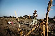 Zimbabwe, Mrs Harison arbejder i majsmarken, men regntiden er udeblevet og normalt ville hendes majs være samme højde som hende på denne årstid.