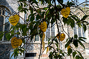 The names of local parish covid-19 victims hang from the branches of a tree outside St. Michael's C of E church, during the Coronavirus pandemic, on 13th August 2020, in Beccles, Suffolk, England.