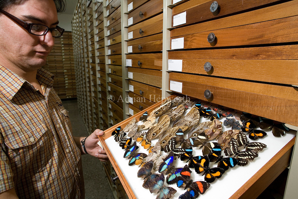 Manuel Solis demonstrates insect collections at the National Institute of Biodiversity (INBio), Santo Domingo de Heredia, San Jose, Costa Rica.<br />
