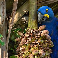BR, Brazil_Chapada_Pantanal
