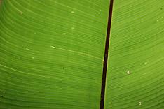Verde Costa Rica