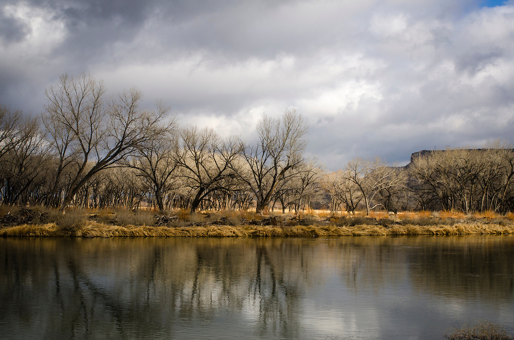 Landscapes and details from along the San Juan River below Navajo Dam at the recently restored 80-acre Hammond Tract – a favorite among anglers.  January, 2015.