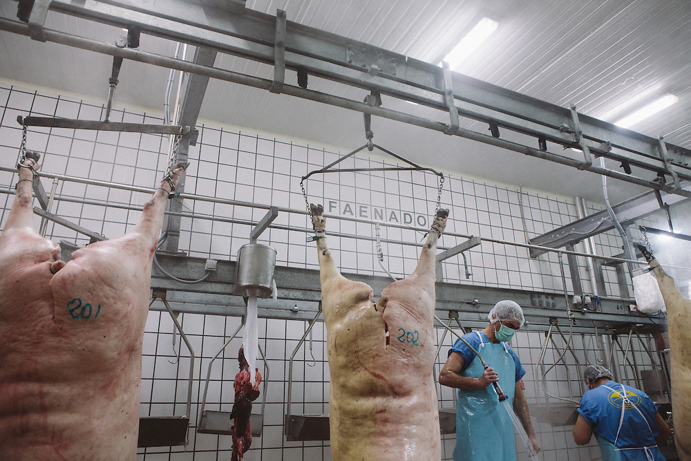 Iberico pig corpses are gutted and butchered in the Sierra De Barbellido Plant, Extramadura (Barajoz Province), Spain.