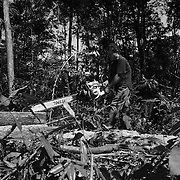Logging near the Kaman River on the Ho Chi Minh Trail, Laos. Projected for completion in the end of 2008, the Kaman River dam project is expected to flood large sections of the legendary Ho Chi Minh Trail in Laos.