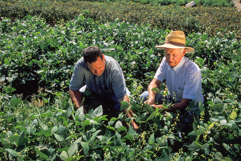 CENTRAL VALLEY, CALIFORNIA - Michael Straugh and Malcom Rice in vegetable patch at the UC Kearney Ag Center