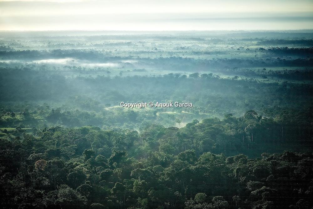Foret amazonienne. | Floresta da Amazonia.