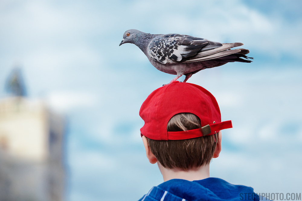 A friendly pigeon standing on the head of a young boy in St. Mark's Square (Piazza San Marco), Venice, Italy.<br />