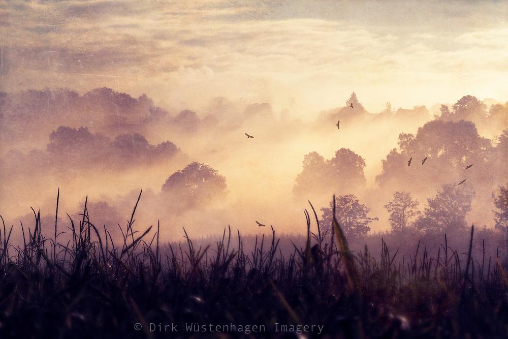 Sunrise on a misty morning in a rural landscape