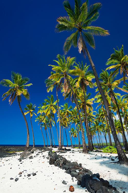 Coconut palms at Pu'uhonua O Honaunau National Historic Park (City of Refuge), Kona Coast, Hawaii USA